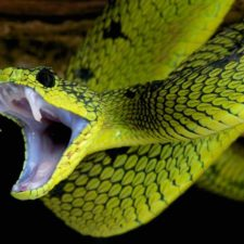 dream interpretation snake seing snake in dream meaning