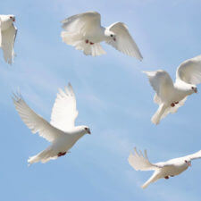 Dreams about birds – what do they mean? (Dream