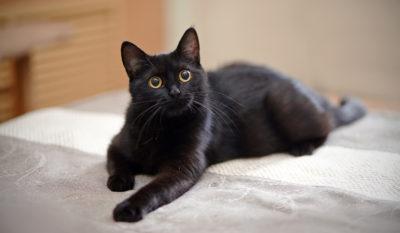 black cat in dream black cat dream meaning
