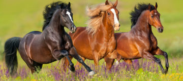 dream interpretation horse seing horse in dream what does it mean