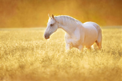 dream interpretation white horse seing black horse in dream meaning what does it mean